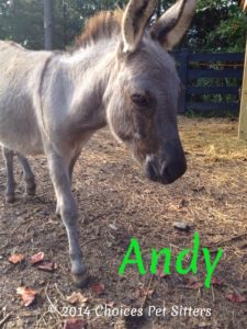 Pet Gallery - Andy