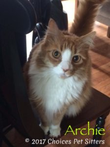 Pet Gallery - Archie