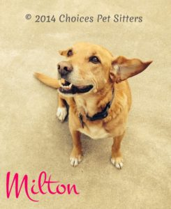 Pet Gallery - Milton