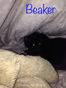 Pet Gallery - Beaker