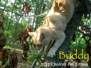Pet Gallery - Buddy