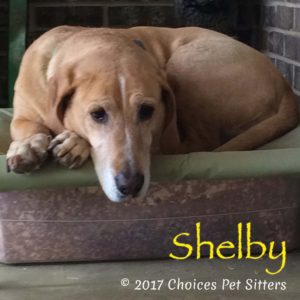 Pet Gallery - Shelby