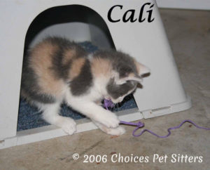 The Pet Gallery - Cali