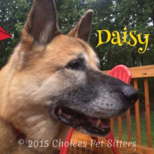Pet Gallery - Daisy