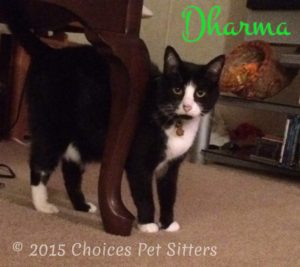 Pet Gallery - Dharma