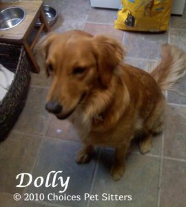 Pet Gallery - Dolly