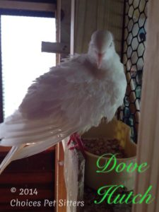 Pet Gallery - Dove Hutch