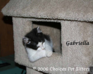 The Pet Gallery - Gabriella