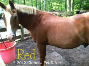 Pet Gallery - Red