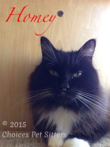 Pet Gallery - Homey