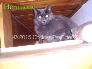 Pet Gallery - Hermione