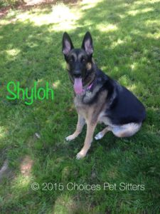 Pet Gallery - Shyloh
