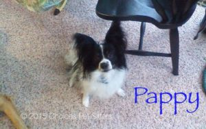 Pet Gallery - Pappy