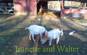 Pet Gallery - Jeanette and Walter