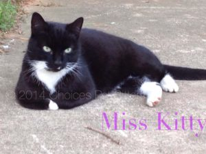 Pet Gallery - Miss Kitty