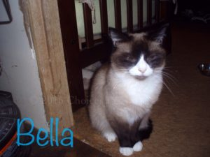 Pet Gallery - Bella