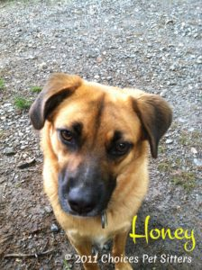 Pet Gallery - Honey