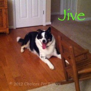 Pet Gallery - Jive