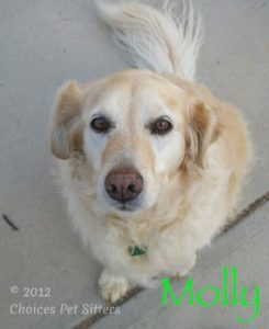 Pet Gallery - Molly