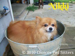 Pet Gallery - Nikki