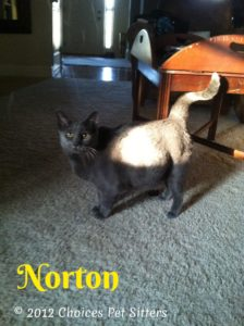 Pet Gallery - Norton