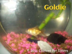 Pet Gallery - Goldie