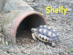 Pet Gallery - Shelly