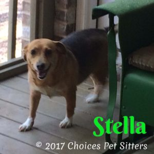 Pet Gallery - Stella