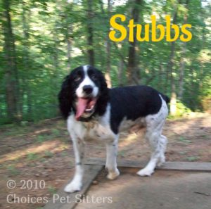 Pet Gallery - Stubbs
