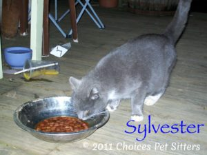 Pet Gallery - Sylvester