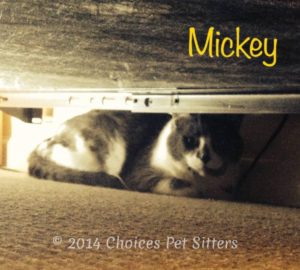 Pet Gallery - Mickey