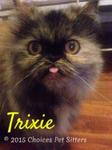 Pet Gallery - Trixie