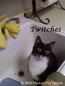 Pet Gallery - Twitches