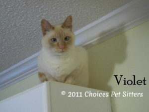 The Pet Gallery - Violet