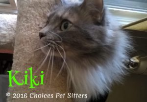 Pet Gallery - Kiki