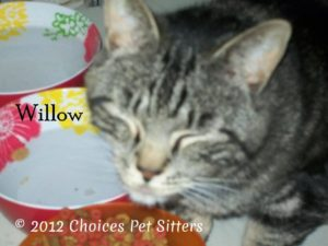 Pet Gallery - Willow