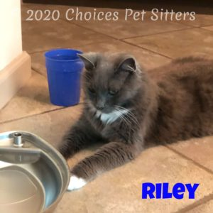 Kitty - Riley